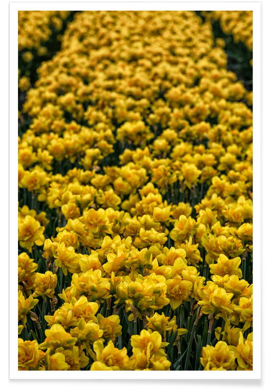 Golden Tulips affiche