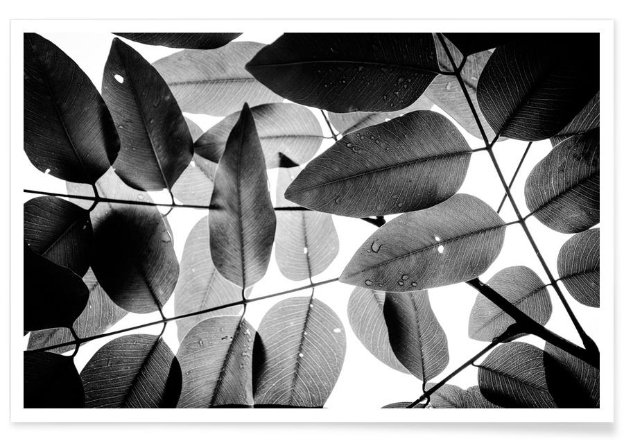 Experiments with Leaves 2 Poster