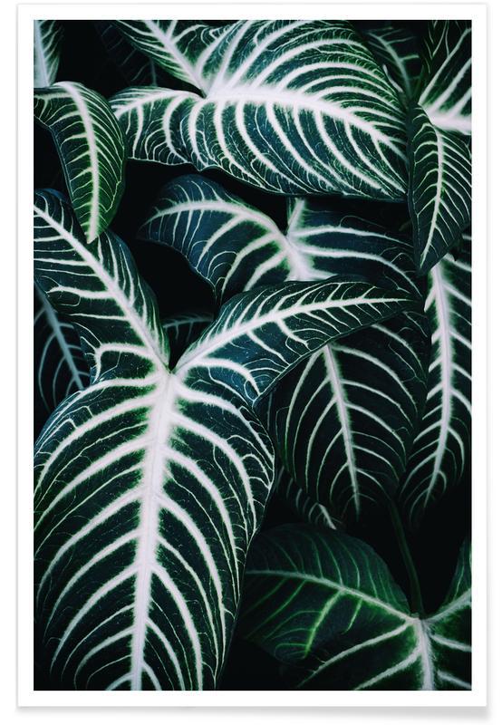 Jungle 2 poster