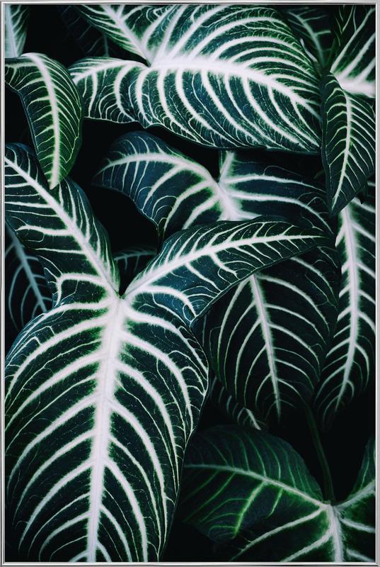 Jungle 2 poster in aluminium lijst