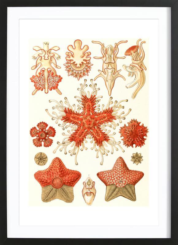 Echinodermata Framed Print