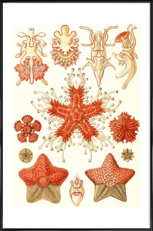 Echinodermata Framed Poster