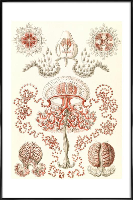 Blumenquallen Framed Poster