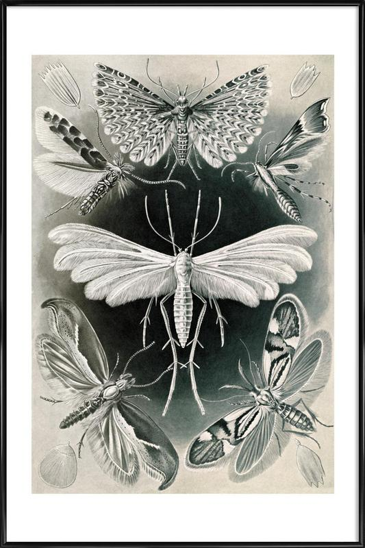 Motten Gerahmtes Poster