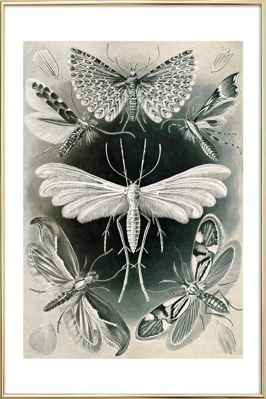 Motten Poster im Alurahmen