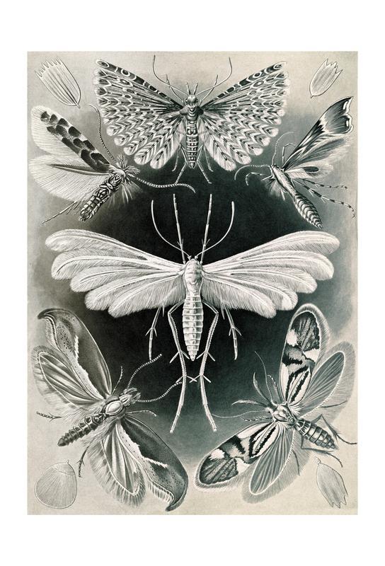 Motten Acrylglasbild