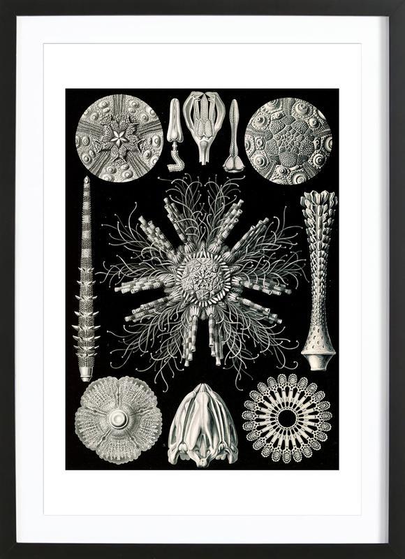 Igelsterne Framed Print