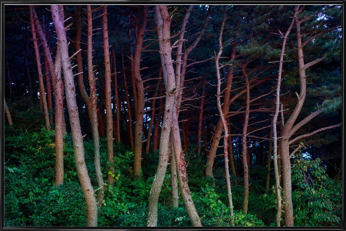 Busan Trees Framed Poster