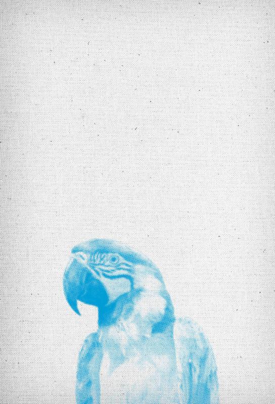 Papagei 01 Acrylglasbild | Dekoration > Bilder und Rahmen > Bilder | Mehrfarbig | Aluminium