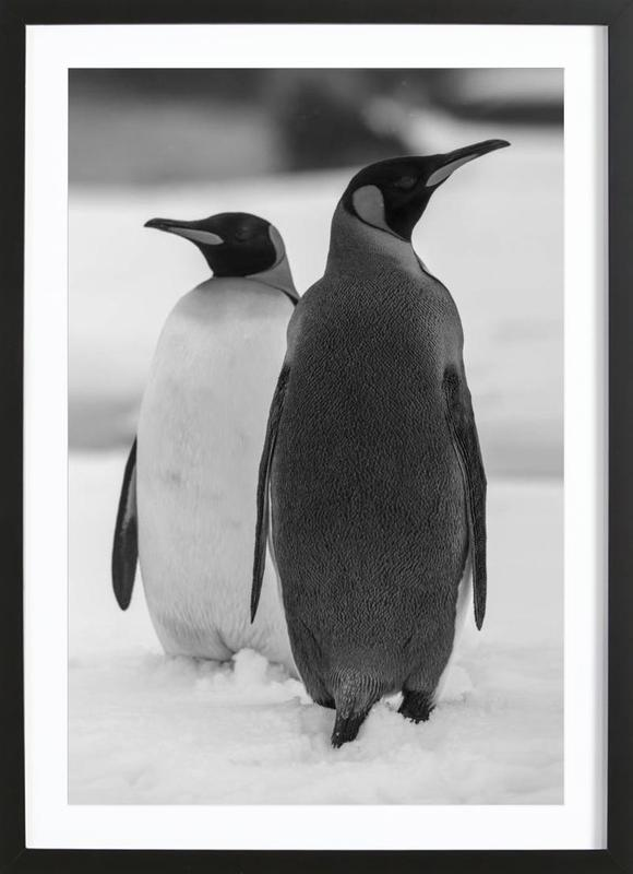 The Penguins ingelijste print