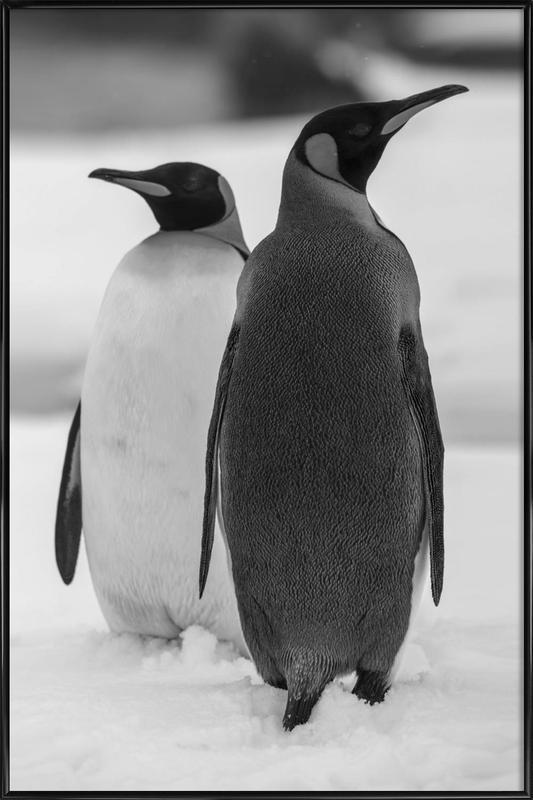 The Penguins ingelijste poster