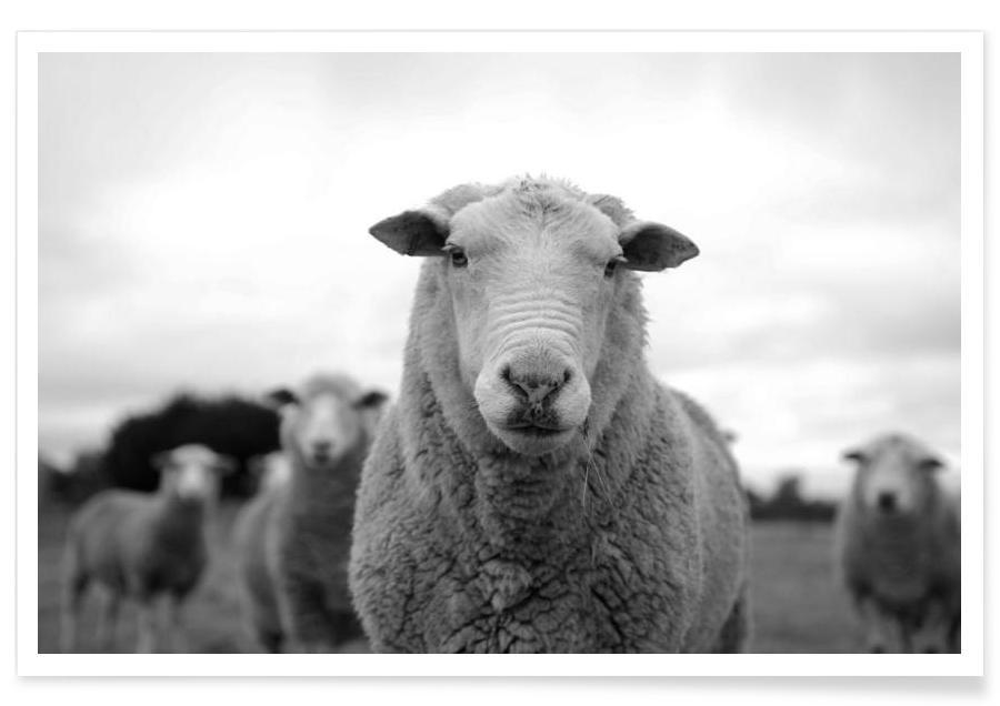 The Sheep poster