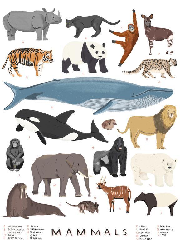 Mammals Canvas Print