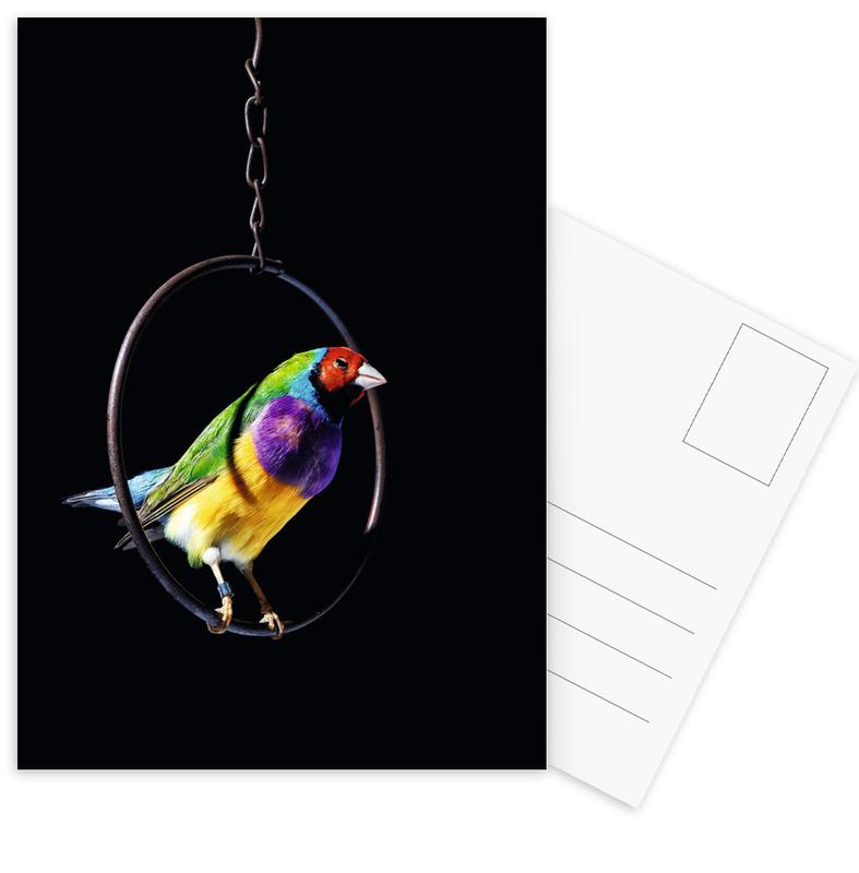 Birds Everywhere 4 Postkartenset | Dekoration > Accessoires | Mehrfarbig
