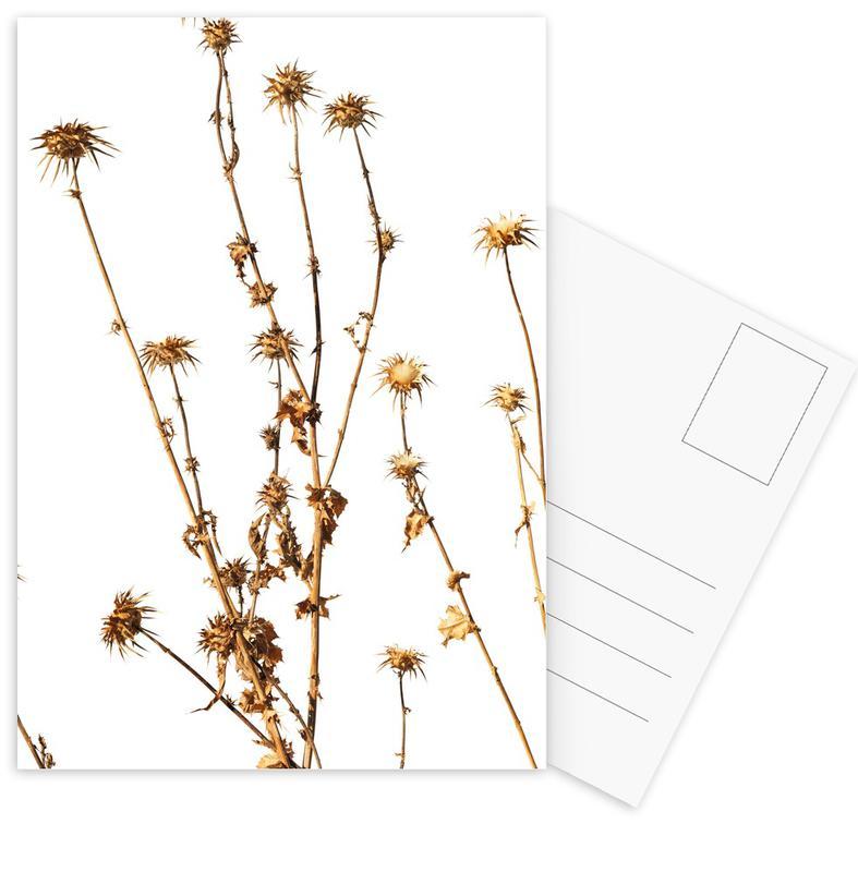 Flora Mariendistel Postkartenset