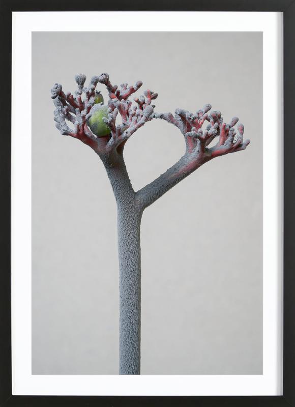 Staub Korallenblume Premium Poster gerahmt   Dekoration > Bilder und Rahmen > Poster   Mehrfarbig