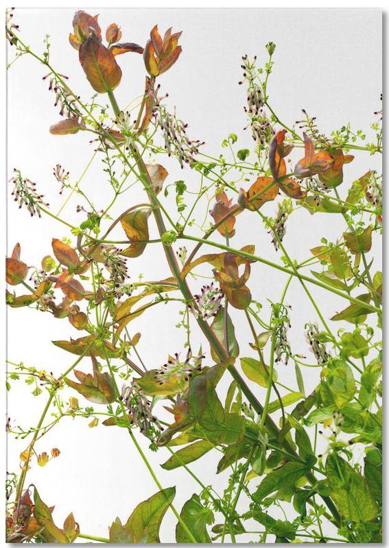 Flora - Eukalyptus -Notizblock