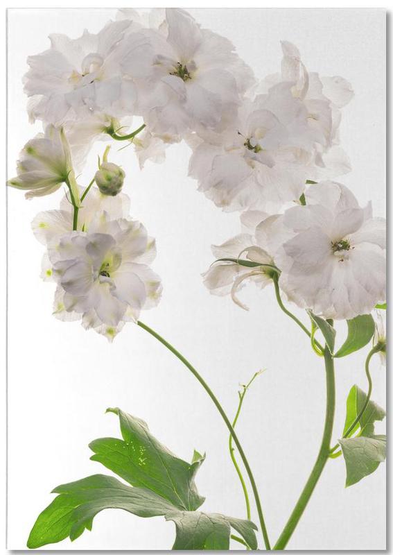 Flora - Pfingstrose Weiß -Notizblock