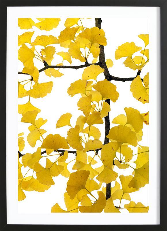 Flora - Ginko -Bild mit Holzrahmen