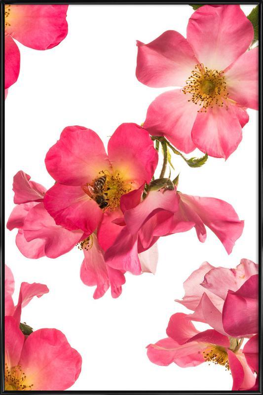 Flora - Rose 2 -Bild mit Kunststoffrahmen