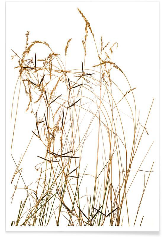 Flora Gras Premium Poster
