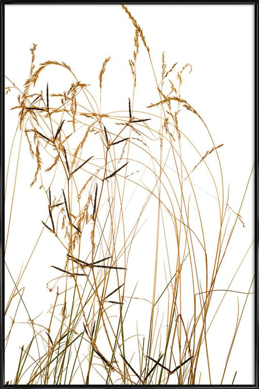 Flora Gras Gerahmtes Poster