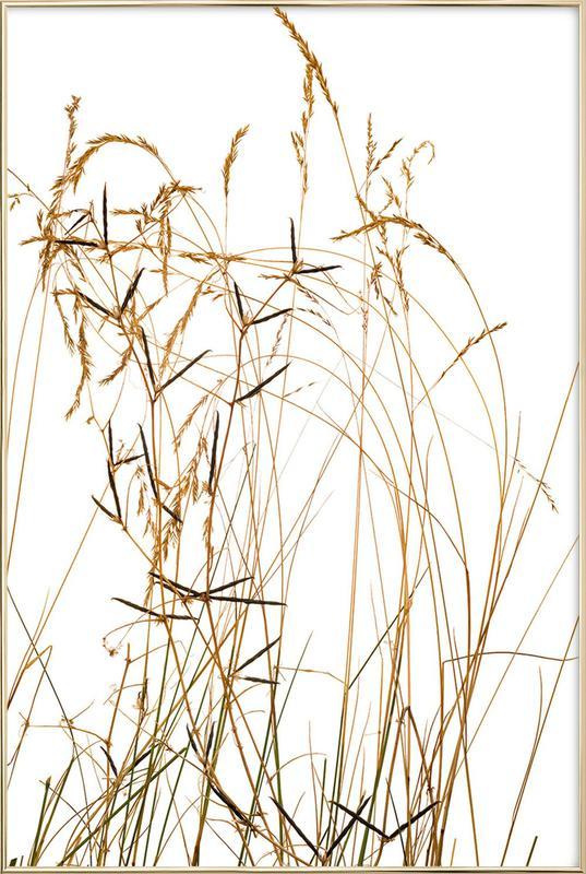 Flora Gras Poster im Alurahmen