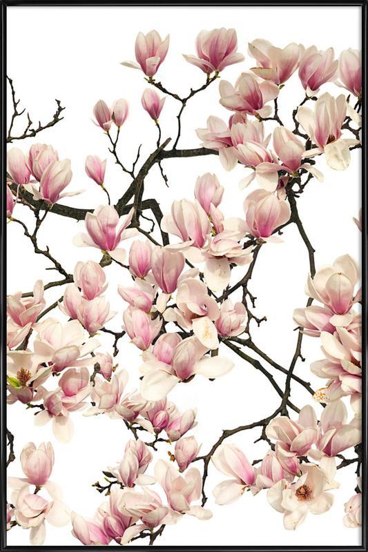 Flora - Magnolie affiche encadrée