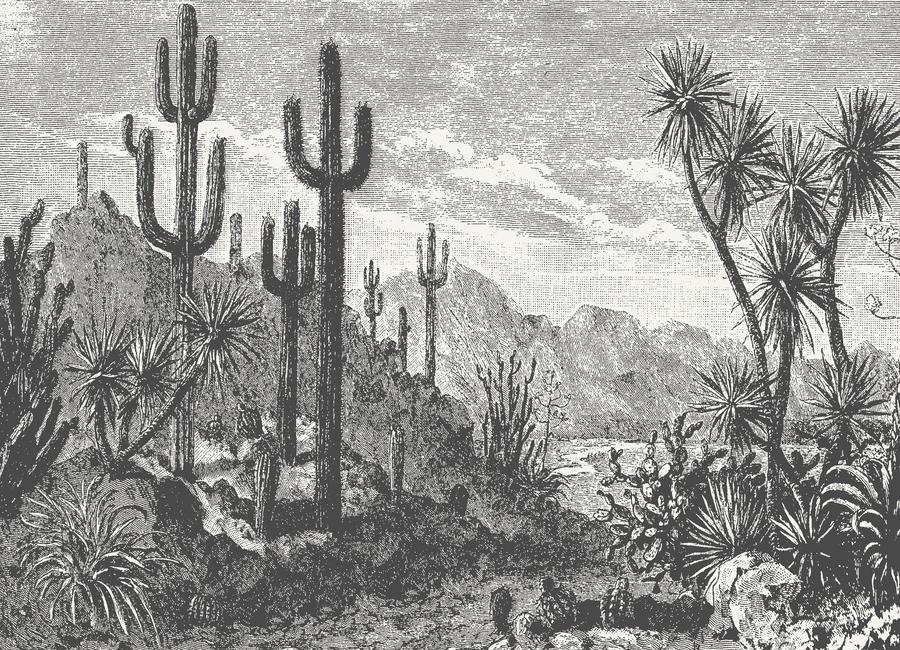 Cacti in Mountains -Leinwandbild