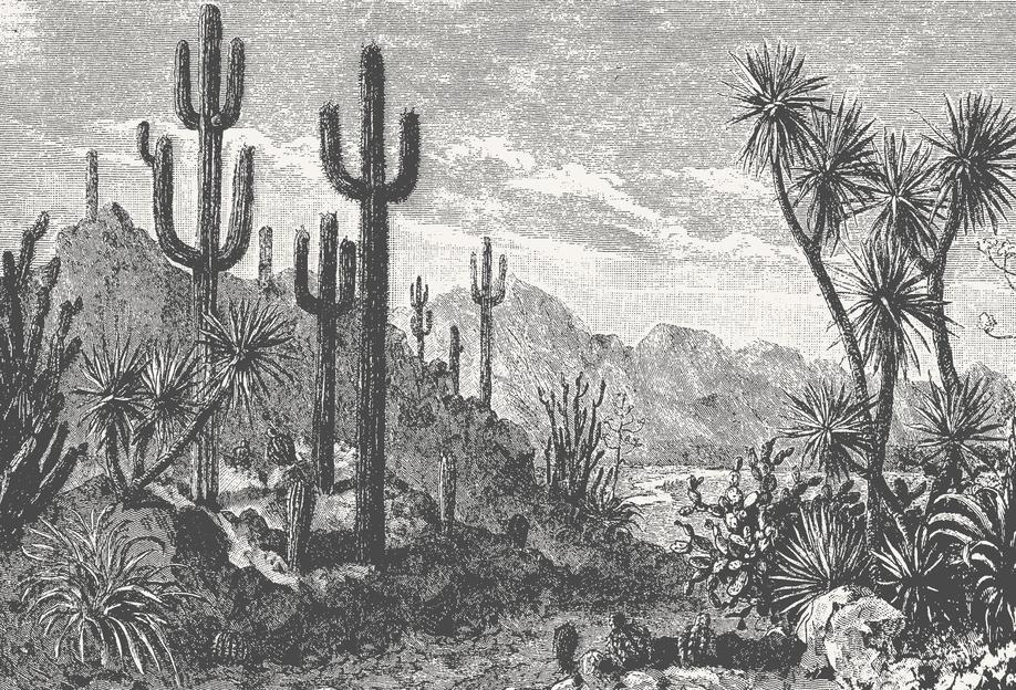 Cacti in Mountains Aluminium Print