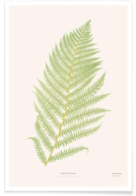 Ferns 2 -Poster
