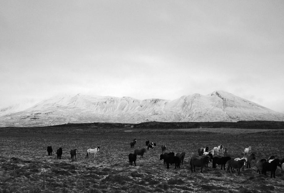 The herd Acrylic Print
