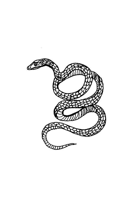Snake White Alu Dibond Druck | Dekoration > Bilder und Rahmen > Poster | Mehrfarbig | Aluminium