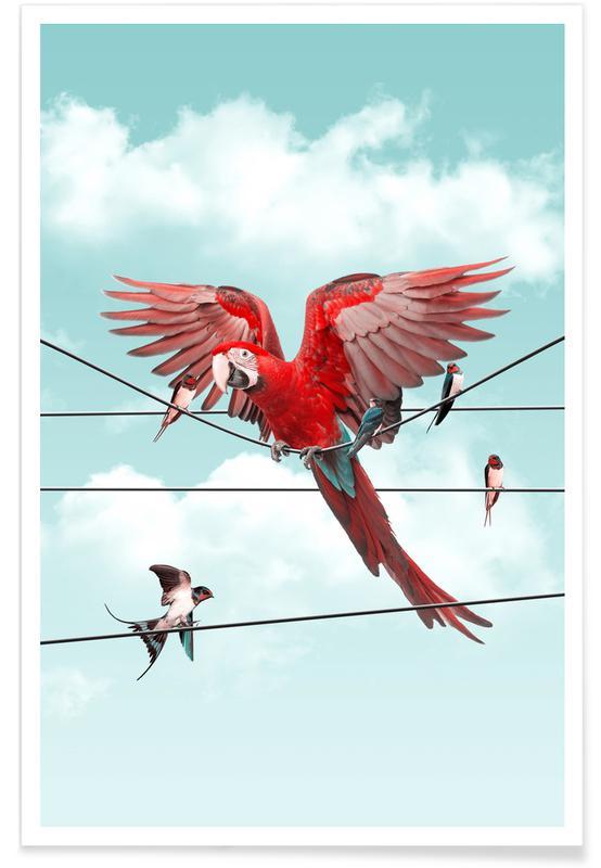 Colourful Stranger Poster