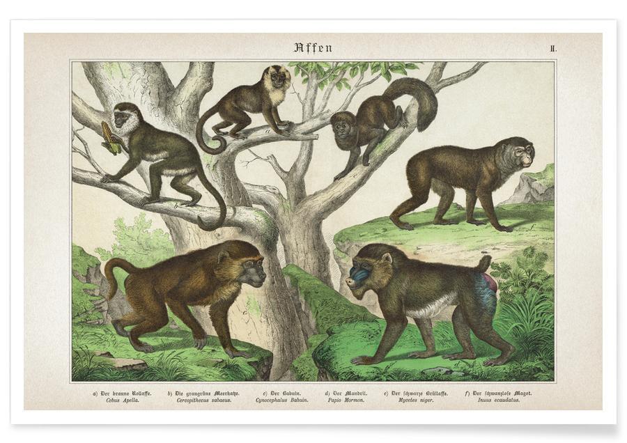 Affen 2 - Schubert Poster
