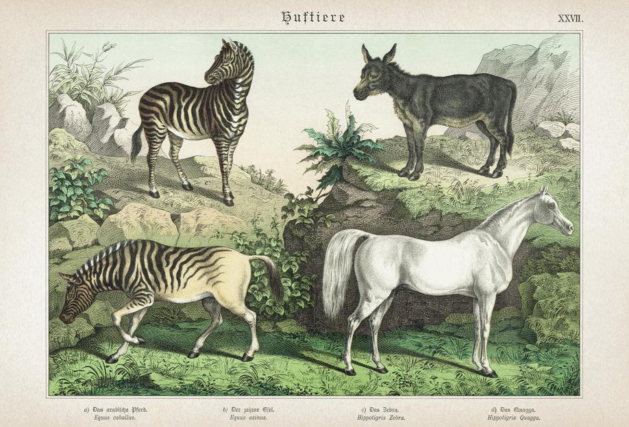 Huftiere 27 - Schubert Acrylic Print
