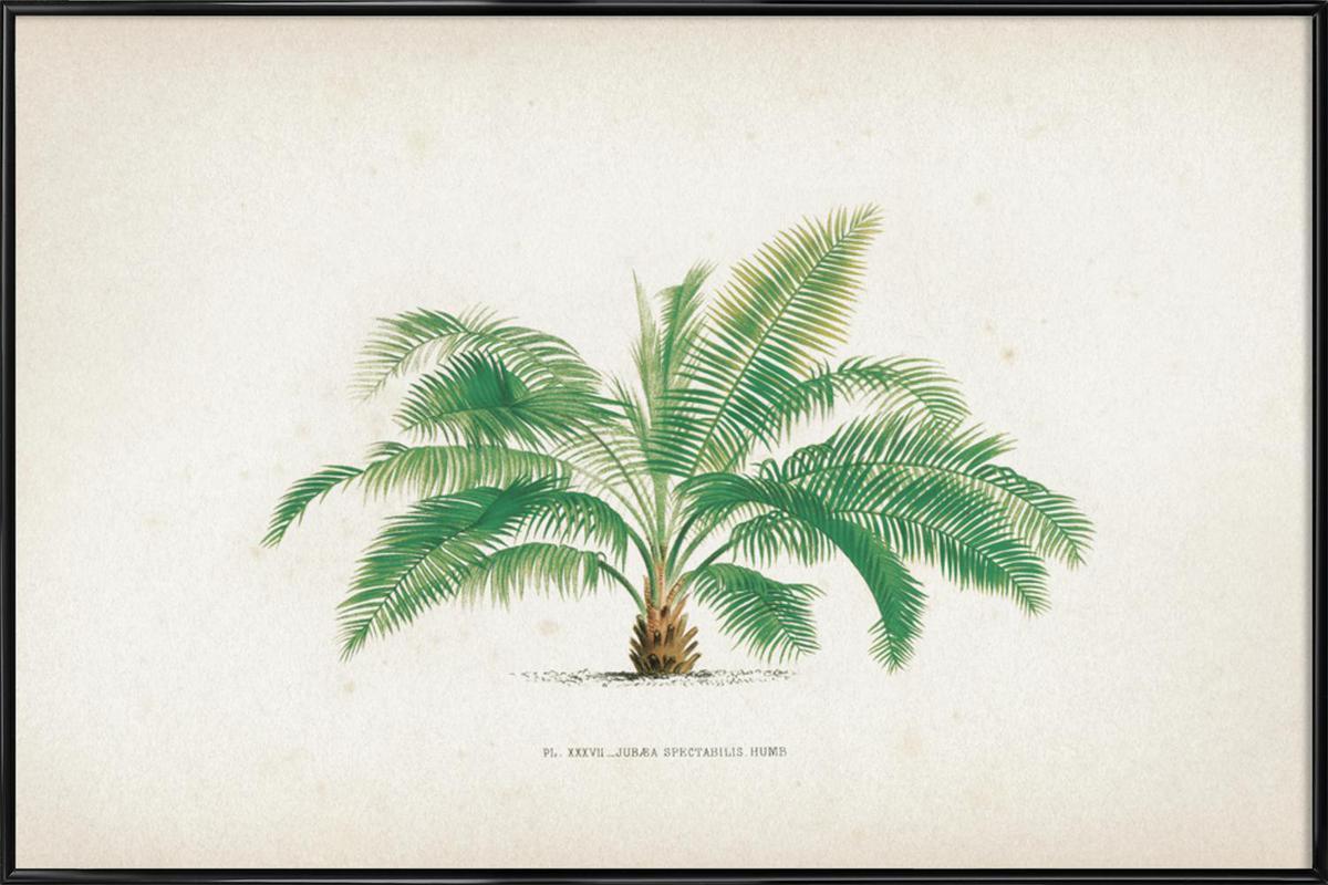 Les Palmiers 37 - Kerchove Framed Poster