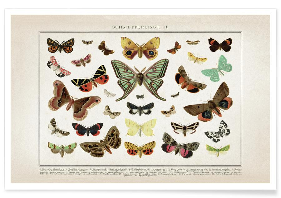Schmetterlinge 2 - Brockhaus Poster