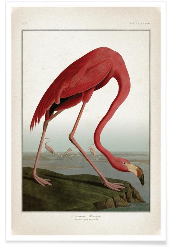 American Flamingo - Audubon affiche