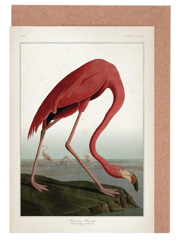 American Flamingo - Audubon -Grußkarten-Set