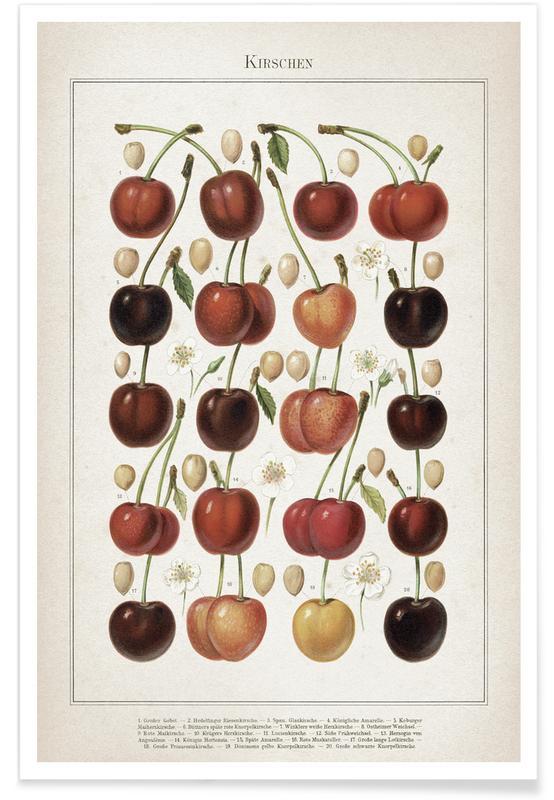 Kirschen - Meyers -Poster