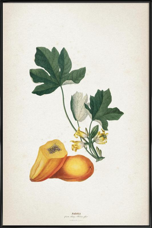 Papaya - Ehret Framed Poster