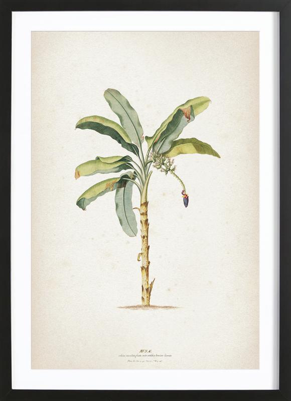Musae Maculato - Ehret Framed Print