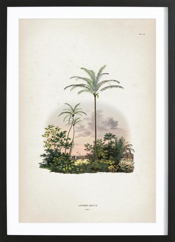 Astrocaryum Vulgare - Martius Plakat i træramme
