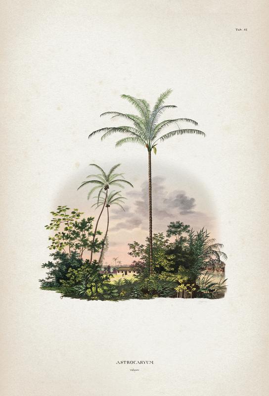 Astrocaryum Vulgare - Martius Acrylic Print