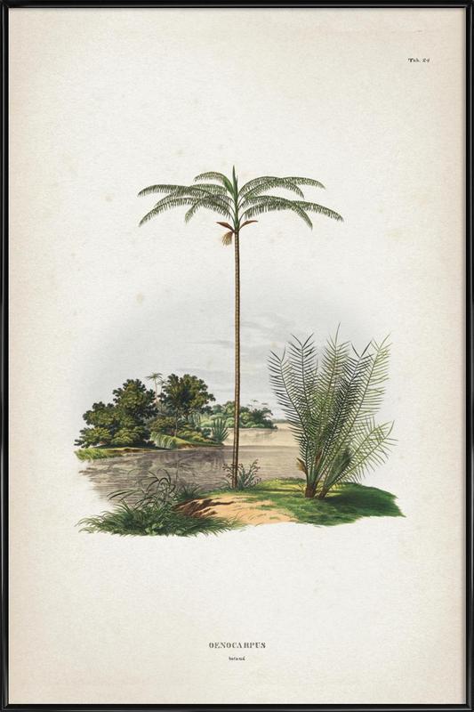 Oenocarpus Bataua - Martius Framed Poster