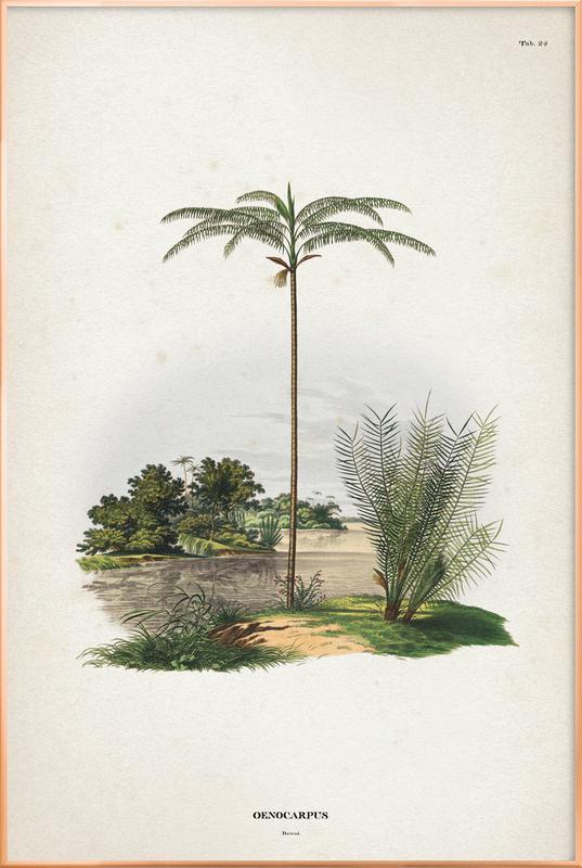 Oenocarpus Bataua - Martius Poster in Aluminium Frame