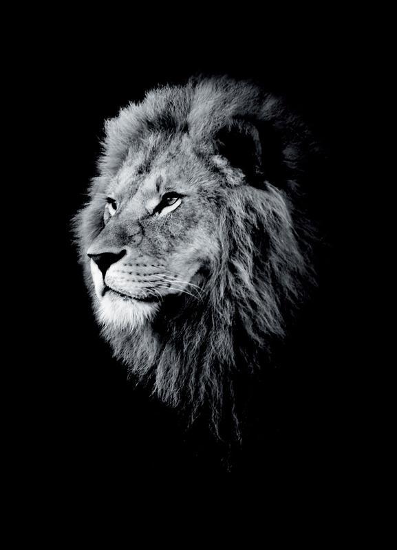 Dark Lion Head Canvas Print