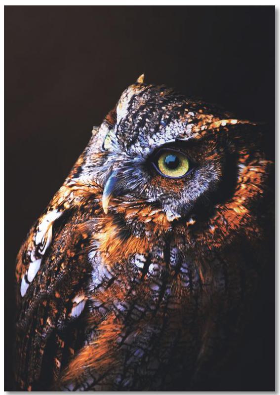 Owl -Notizblock