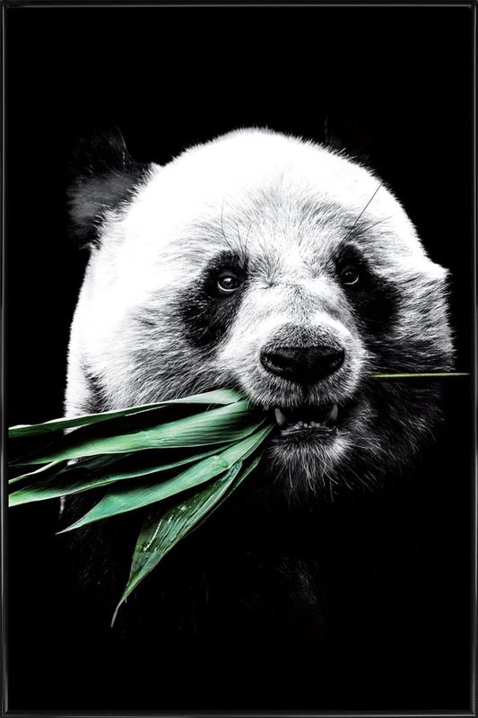 Dark Panda -Bild mit Kunststoffrahmen